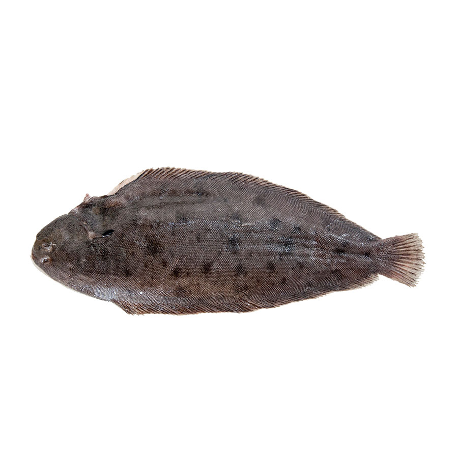 Dover sole northumberland seafood for Dover sole fish