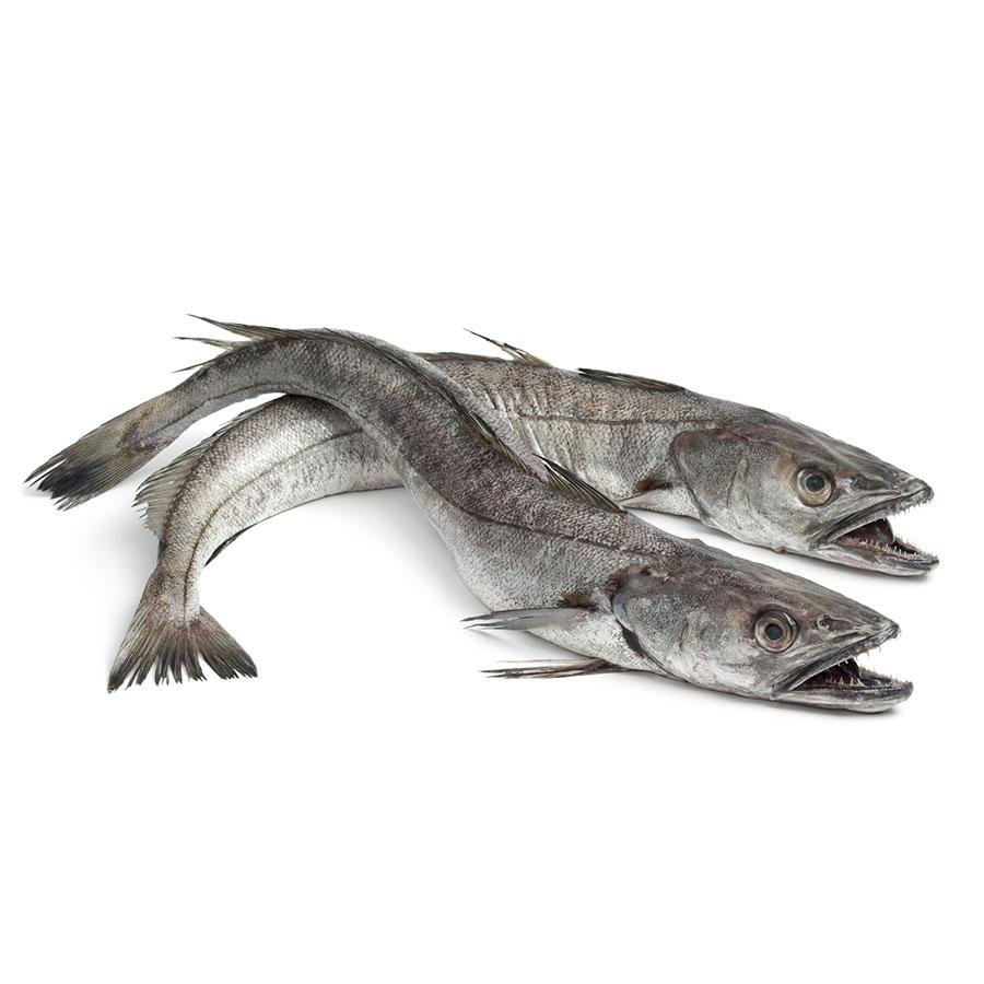компания фотографии рыбы хек необычных