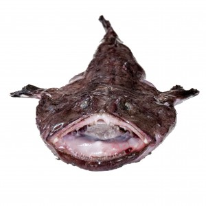 Monkfish-front-2-rs-1